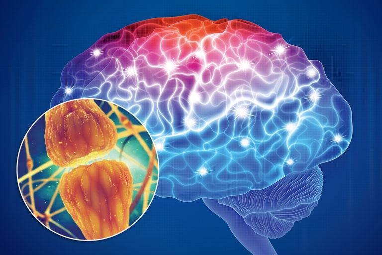 Nuevas luces sobre la comunicación neuronal