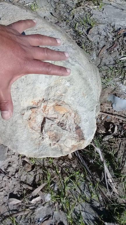 ENCUENTRAN FÓSILES MARINOS EN PLAYAS DE TIJUANA.Con dos millones de años antigüedad