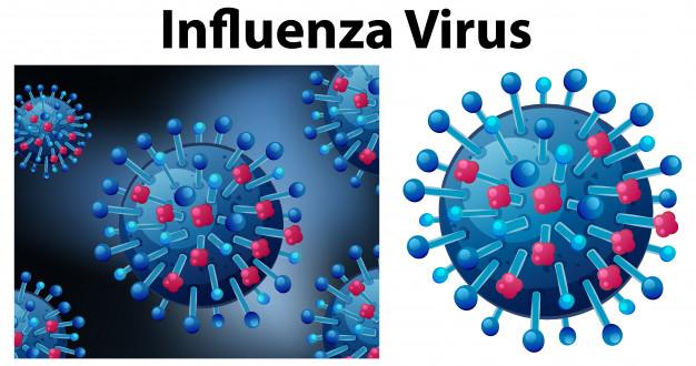 MALAS NOTICIAS: La influenza tipo A vuelve más poderoso al coronavirus