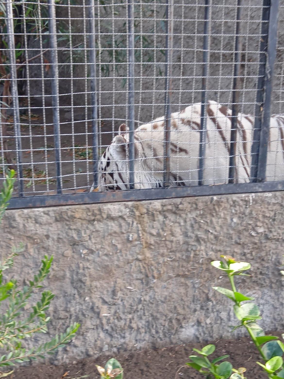 LOS NACIMIENTOS DE ANIMALES EN LOS PARQUES TEMATICOS